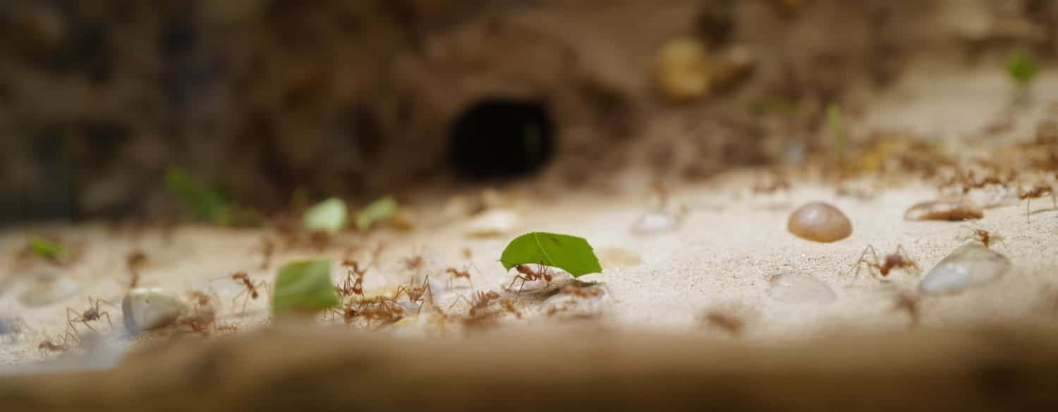 Keeping an ant colony as pet