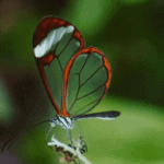 Why are insects the most successful animals in the world