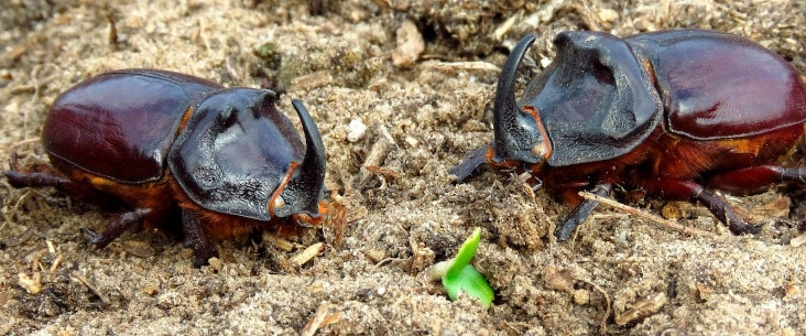 Beetle substrate guide: What you should know