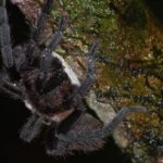 Are tarantulas spiders? A complete answer