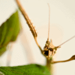 beginners guide for keeping stick insects